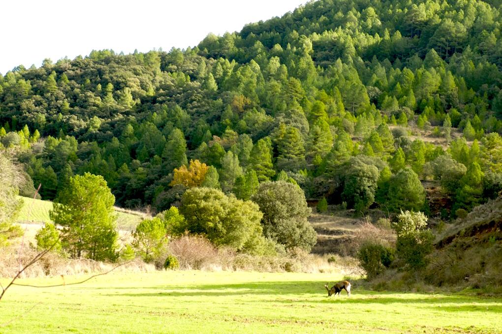 Comarca-Matarraña